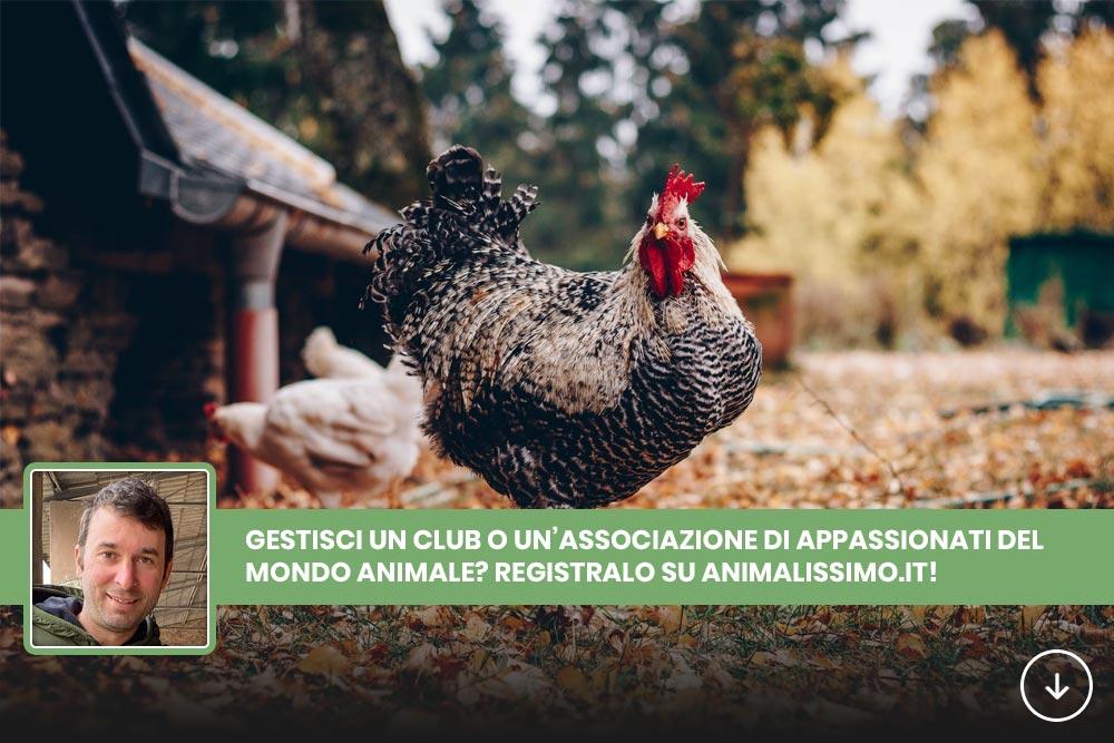 Registra Club Animalissimo